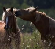 Особенности лошадей