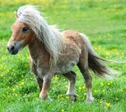 Жизнь пони