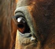 10 зрительных способностей лошади
