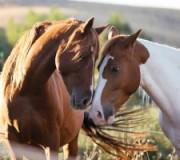 10 фактов о любви итальянцев к лошадям