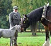 Современное значение лошади