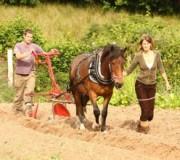 ТОП-6 лошадиных профессий