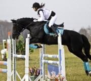 Факты о конном спорте