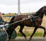 Содружество рысистого коневодства