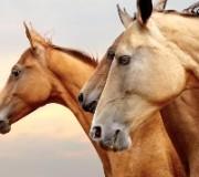 10 фактов о чувствах и памяти лошадей
