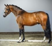Как создаются баварские породистые лошади