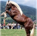 Норикские лошади