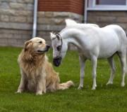 Особенности мини-лошади