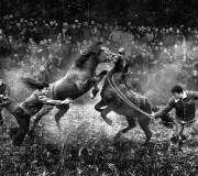 5 фактов о лошадиных боях