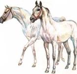 Донское коневодство