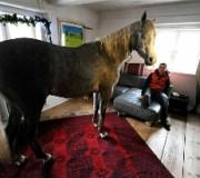 Лошади в домашних условиях