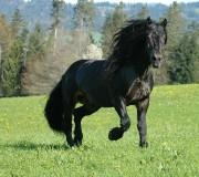 15 фактов о Норикийской лошади