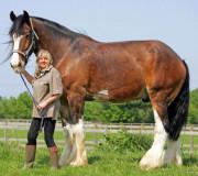 Высокие лошади