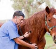 Лошадиный врач